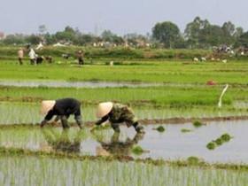 越南人口近億,為何還有越南稻米出口呢?